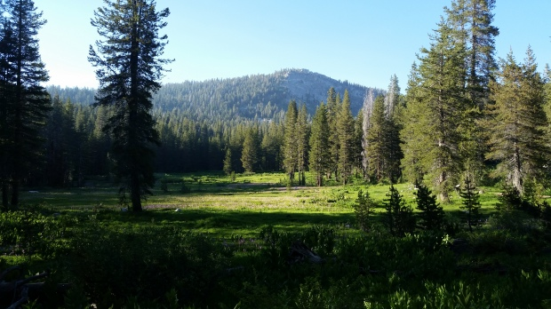Backcountry Meadow